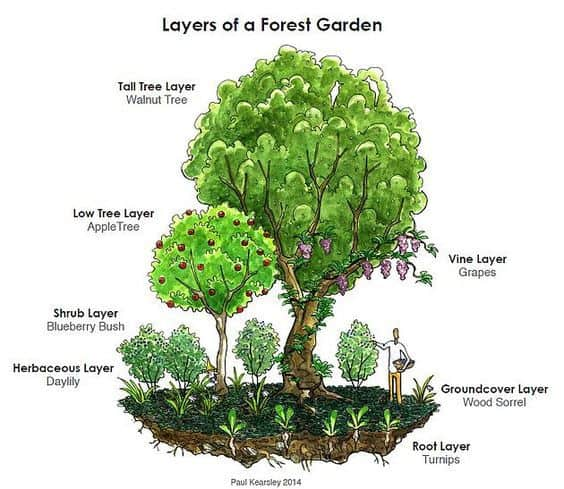 7-layers-of-a-food-forest.jpg